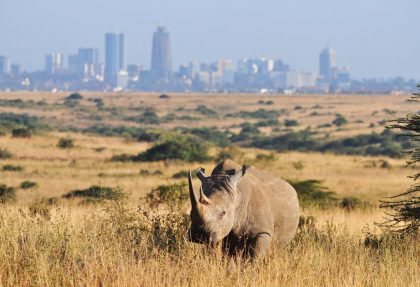 Rhino at Nairobi National Park || Kenya Tours and Safaris