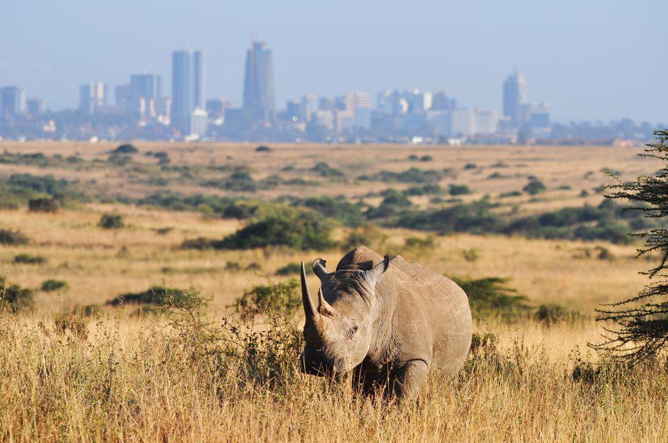 Rhino at Nairobi National Park || Kenya Tours and Safaris