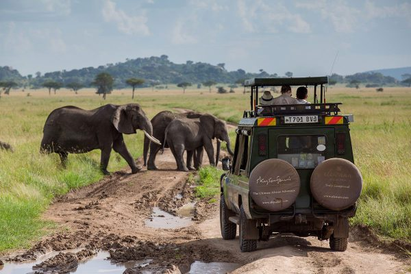 Elephants at Amboseli National Park | 4x4 safari game drive