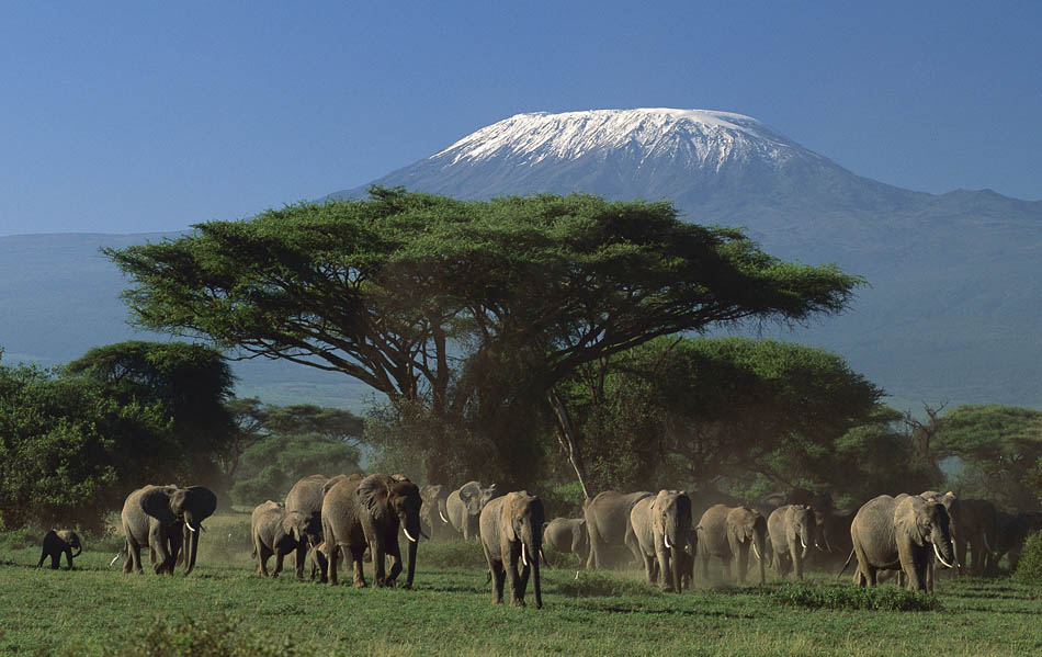 African Elephant at Amboseli National Park, Kenya Tours and Safaris