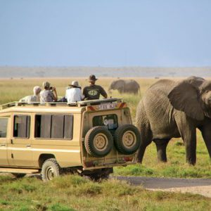Elephant at Amboseli National Park | 4x4 safari game drive
