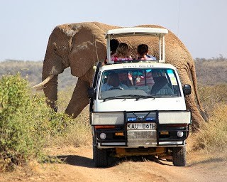 Big Elephant Passing Safari Van