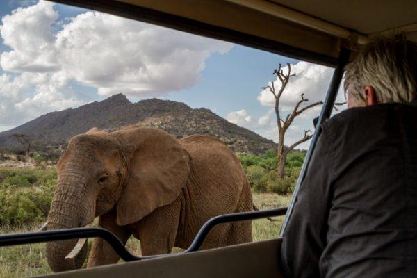 Elephants - Samburu game drives
