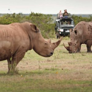 Rhinos at Lake Nakuru - Game viewing | Penfam Tours and Safaris