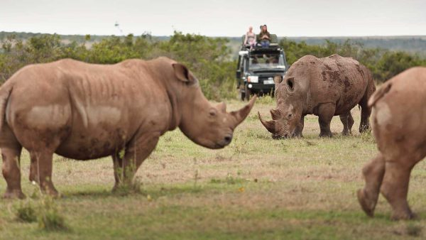 Rhinos at Lake Nakuru - Game viewing | Penfam Tours and Safaris