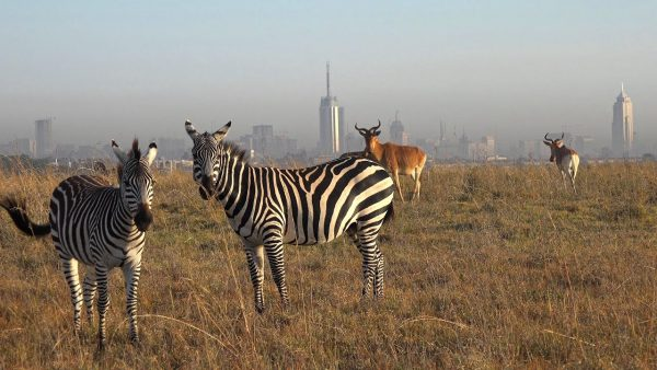 Nairobi National Park | Kenya Tours and Safaris