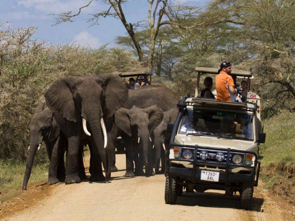 Elephants - Seregeti game drives
