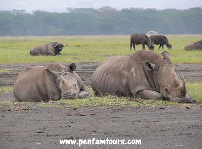 Lake Nakuru rhinos | Penfam Tours and Safaris