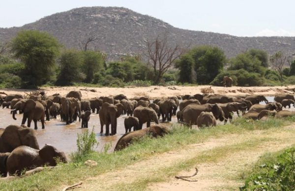 Samburu Game Reserve Elephants | Kenya Safaris