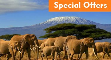 Combined Kenya Tanzania Packages Special Offer