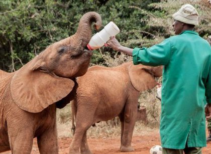 Baby Elephants at David Sheldrick Wildlife Trust