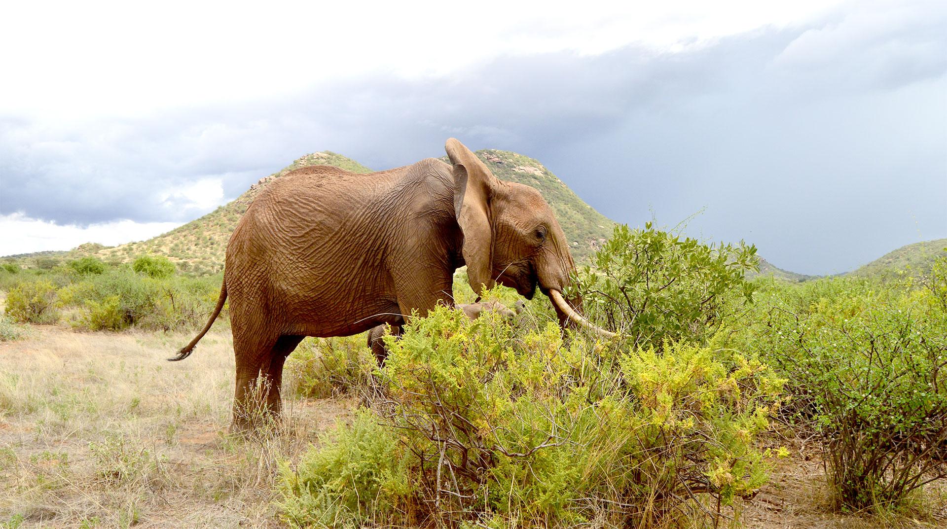Tsavo Elephant - Penfam Tours and Safaris