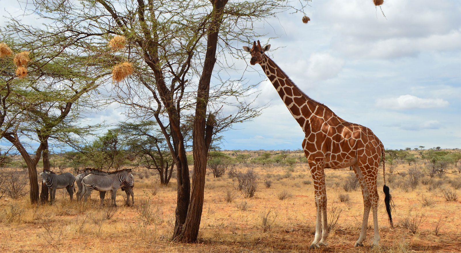Kenya Safaris and Tours | Giraffe Slider