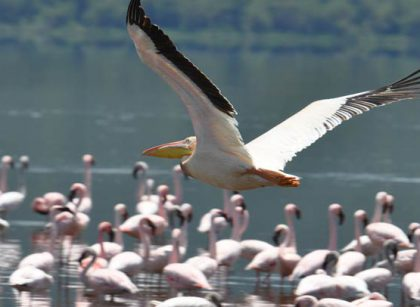 Lake Nakuru Flamingos | Penfam Tours and Safaris