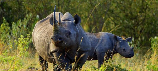 Aberdare National Park Rhino with baby