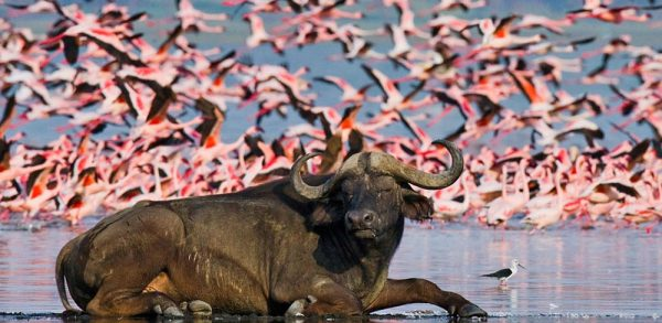 Lake Nakuru wildlife | Penfam Tours and Safaris