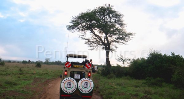 Penfan Tours 4x4 Landcruiser tour van safari drive at Nairobi National Park