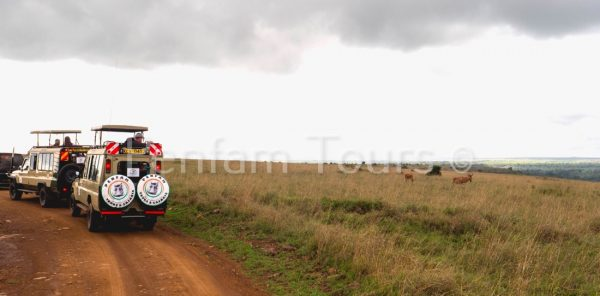 Nairobi National Park your on the Penfam tour and Safaris 4x4 tour van