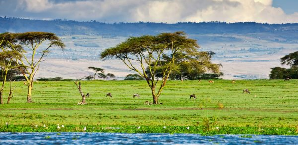Penfam Tours and Safaris |Lake Naivasha Animals