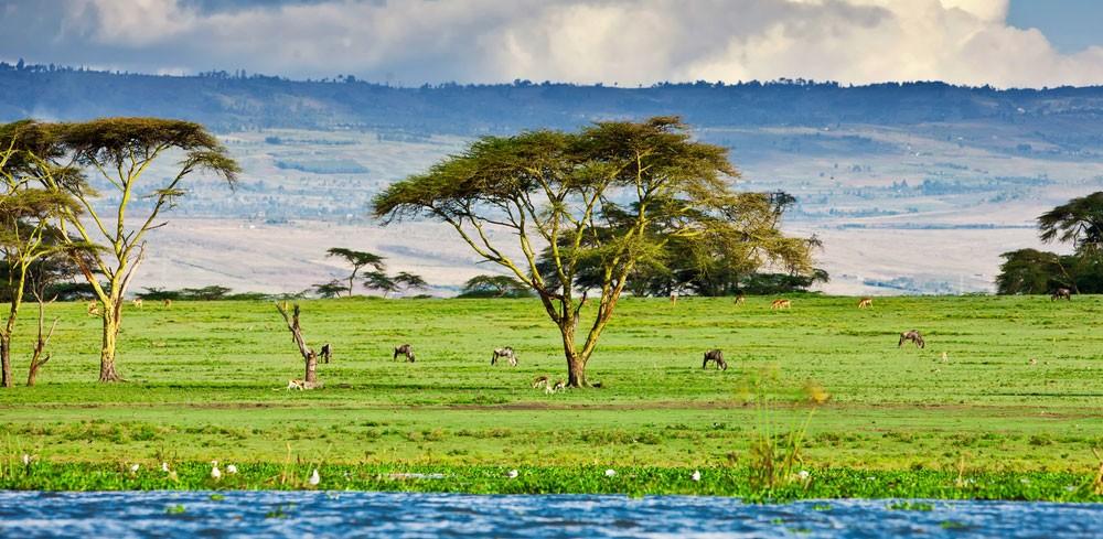 Penfam Tours and Safaris |Lake Naivasha Animals