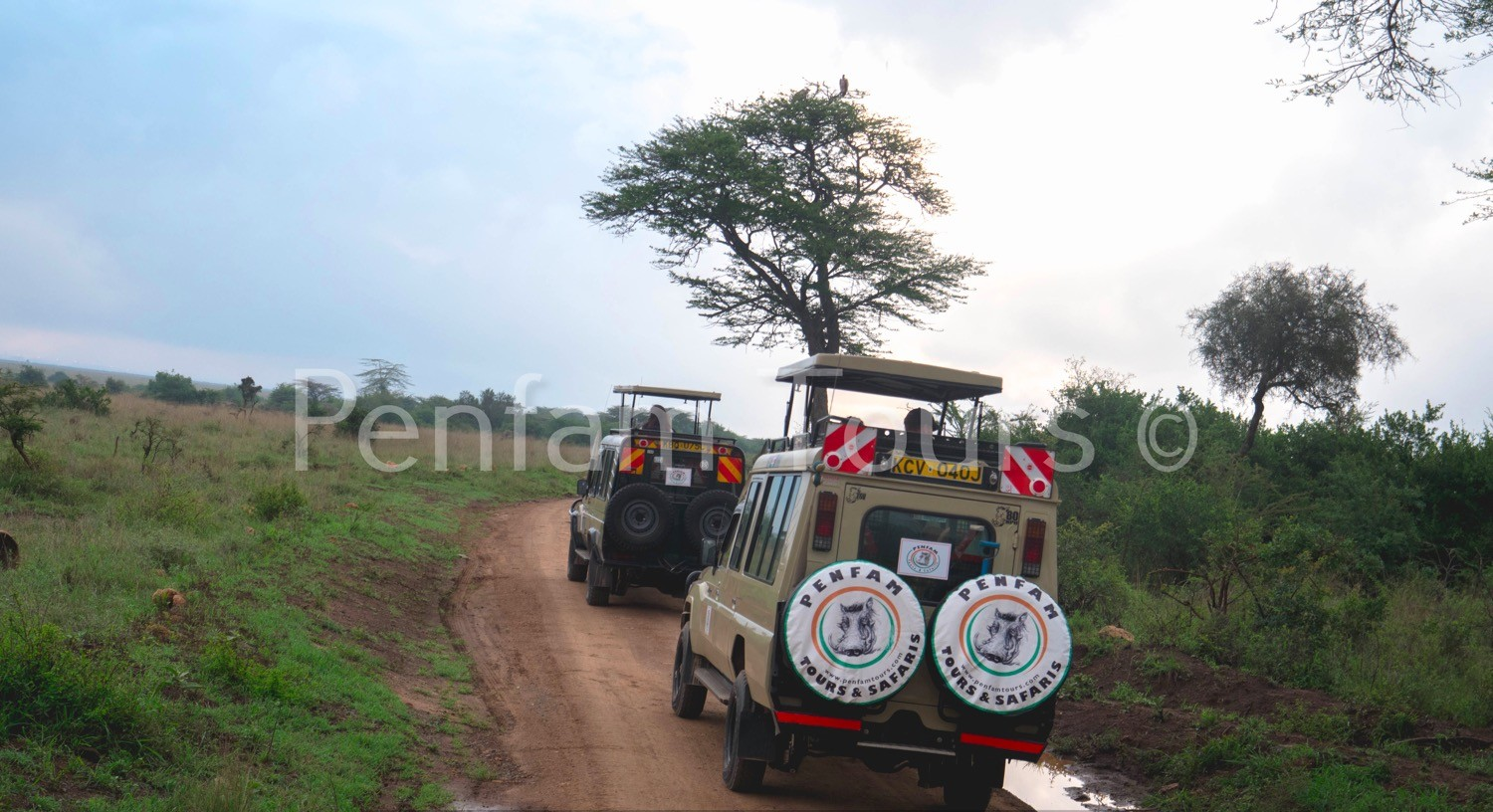 Penfam Tours and Safaris 4x4 Landcruiser Van Game Drive